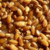 Витамины и свойства перловой каши