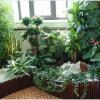 Уход за комнатными растениями: практичное домоводство